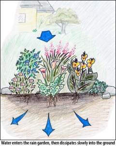 rain_garden[1]