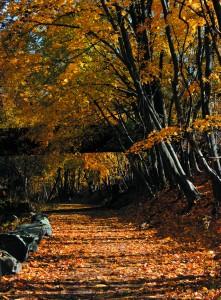 Columbia Trail High Bridge NJ in the Fall